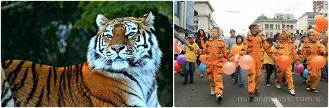 Международный день тигра - 29 июля 2018