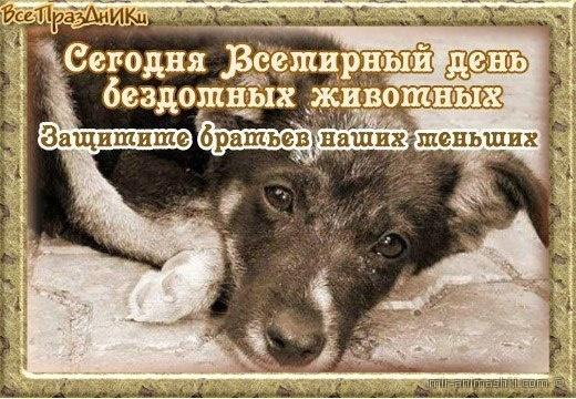 Всемирный день бездомных животных - 20 августа
