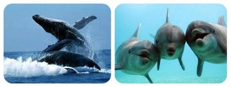 Всемирный день китов и дельфинов - 23 июля 2017