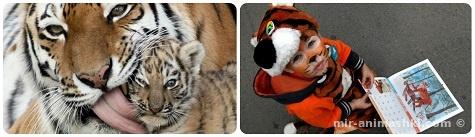 День тигра - 25 сентября 2017