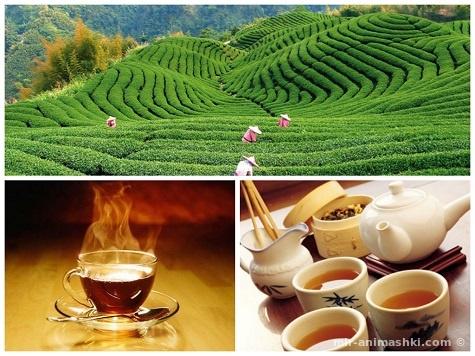 Международный день чая - 15 декабря 2018