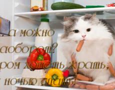 Кот в холодильнике