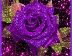 Мерцающая фиолетовая роза