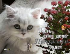 Пожелание от котенка