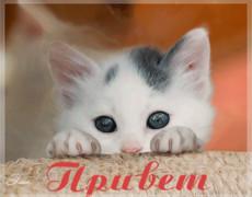 Привет от котёнка